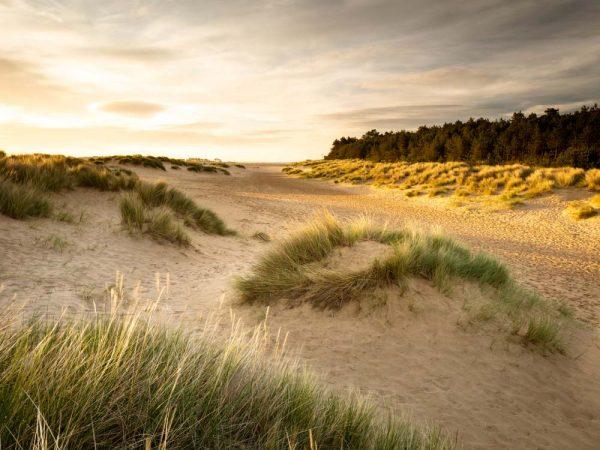 Sand dunes at Wells, Norfolk